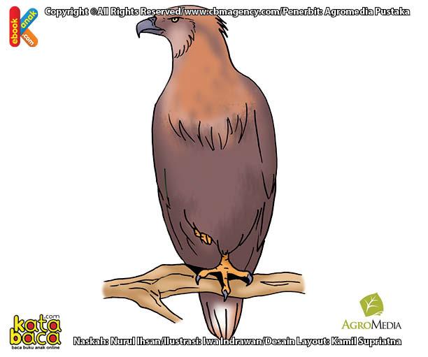 Apakah Nama Burung Berumur Terpanjang di Dunia?