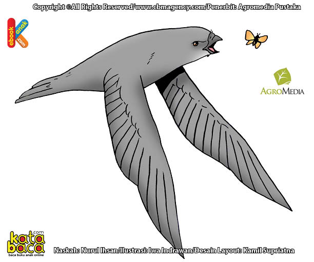 Apakah Nama Burung Penerbang Tercepat yang Bisa Menangkap Serangga di Udara?