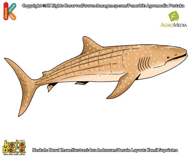 Apakah Nama Ikan Terbesar dan Terlangka di Dunia?