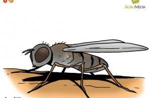 Apakah Nama Serangga Terkecil di Dunia yang Bisa Masuk Lubang Jarum?