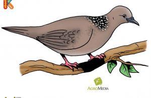 Inilah Burung Bertelur Tercepat, Hanya Perlu 9 Detik untuk Bertelur