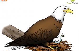 Inilah Nama Burung Pembuat Sarang Terbesar di Dunia