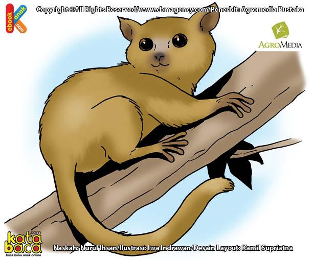 Inilah Primata Terkecil di Dunia yang Hanya Ada di Pulau Madagaskar