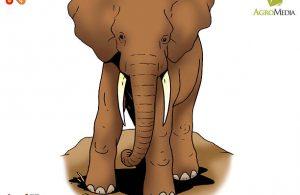 Kenapa Gajah Disebut Binatang Paling Rakus di Dunia?