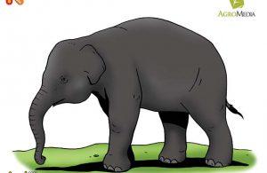 Kenapa Gajah Disebut Mamalia Darat Berusia Terpanjang?