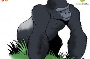 Kenapa Gorila Disebut Primata Terbesar di Dunia?