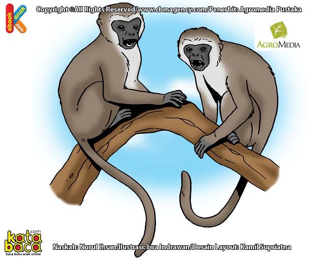 Kenapa Monyet Vervet Disebut Monyet Pembuat Panggilan Terbanyak di Dunia?