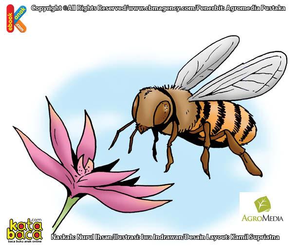 Lebah Serangga Terkuat Dunia yang Bisa Membawa 300 Kali Berat Tubuhnya