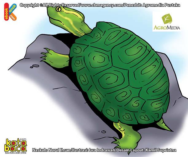 Penyu Hijau Brazil Si Reptil Penjelajah Terjauh di Dunia, Berenang Hingga 2.250 Kilometer