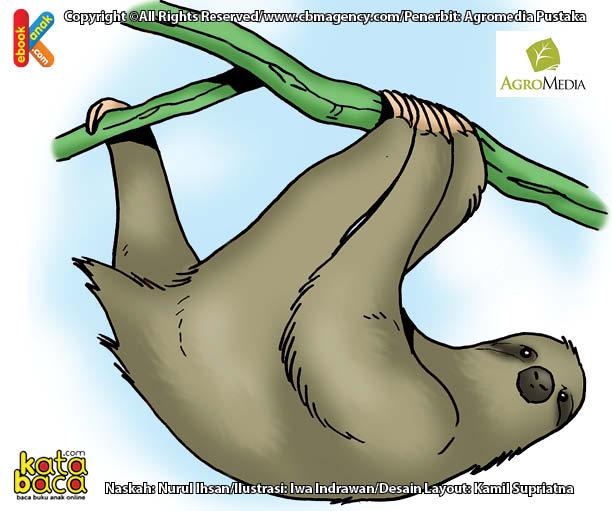 Tahukah Kamu Binatang Paling Malas di Dunia yang Bisa Melahirkan di Atas Pohon