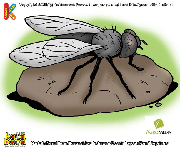 Ternyata Lalat Serangga Berumur Terpendek di Dunia