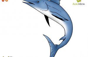 Apakah Nama Ikan Perenang Tercepat di Dunia?