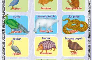 Kamus Visual Binatang Bergambar Dua Bahasa: Indonesia Inggris (8)