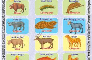 Kamus Visual Binatang Dua Bahasa Indonesia Inggris (2)