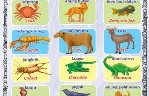 Kamus Visual Binatang Dua Bahasa Indonesia Inggris (3)