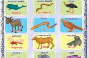 Kamus Visual Binatang Dua Bahasa Indonesia Inggris (4)