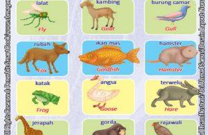 Kamus Visual Binatang Dua Bahasa Indonesia Inggris (5)