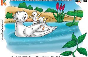 ilustrasi rahasia keajaiban hewan, Apakah Nama Bebek Penerbang Tercepat di Dunia