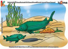 ilustrasi rahasia keajaiban hewan, Apakah Nama Ikan Termahal di Dunia