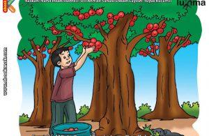 ilustrasi rahasia keajaiban tumbuhan, Apa Nama Tumbuhan Penghasil Minyak