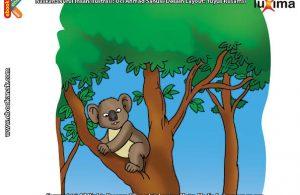 ilustrasi rahasia keajaiban tumbuhan, Apakah Nama Pohon yang Disukai Koala