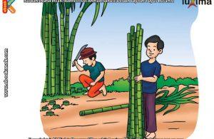 ilustrasi rahasia keajaiban tumbuhan, Apakah Nama Tanaman Penghasil Gula Pasir