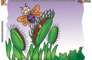 ilustrasi rahasia keajaiban tumbuhan, Bagaimana Cara Daun Kerang Memikat Serangga Datang