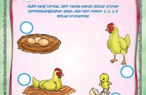 ebook rahasia keajaiban makhluk hidup, Lembar Aktivitas PAUD TK Mengenal Proses Perkembangbiakan Ayam