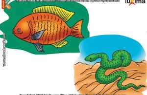 ilustrasi rahasia keajaiban makhluk hidup, Apa Manfaat Sisik Berlendir Bagi Ikan