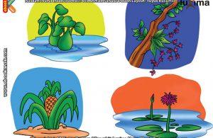 ilustrasi rahasia keajaiban makhluk hidup, Apa Saja Tumbuhan yang Bisa Tumbuh di Air