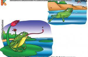 ilustrasi rahasia keajaiban makhluk hidup, Apa yang Dilakukan Katak Jika Kulitnya Mengering