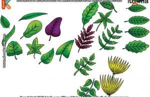 ilustrasi rahasia keajaiban makhluk hidup, Bagaimana Cara Tumbuhan Membuat Makanan