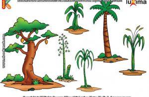 ilustrasi rahasia keajaiban makhluk hidup, Bagaimana Cara Tumbuhan Mengangkut Air dan Mineral