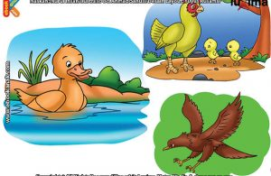 ilustrasi rahasia keajaiban makhluk hidup, Kenapa Bulu Bebek Tidak Basah Ketika Berenang