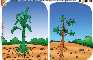ilustrasi rahasia keajaiban makhluk hidup, Seberapa Penting Fungsi Akar Bagi Tumbuhan