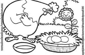 Kuti Si Ayam Betina yang Rajin Bertelur