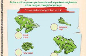baca buku online brain games fun sains28 Mengenal Pertumbuhan dan Perkembangbiakan Katak