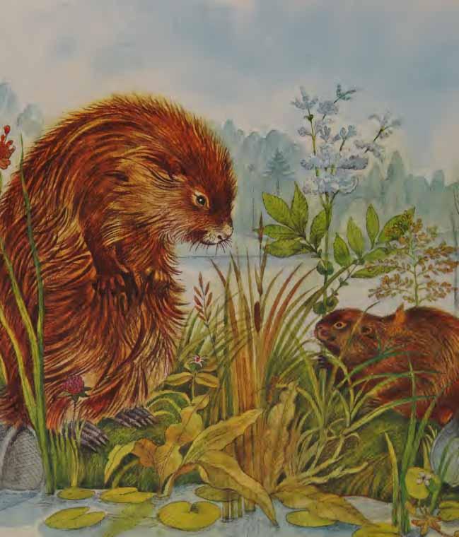 Apakah Perbedaan dan Persamaan Antara Otter dan Beaver