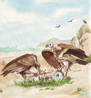 Burung Pemakan Bangkai