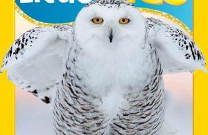 Download Majalah Digital National Geographic Little Kids November-Desember 2019