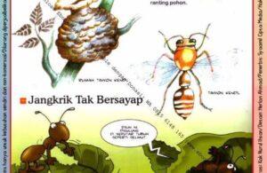 Ebook Legal dan Printable Aku Anak Cerdas Dunia Hewan 2, Rumah Serangga (15)