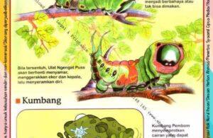 Ebook Legal dan Printable Aku Anak Cerdas Dunia Hewan 2, Ulat dan Kumbang (14)