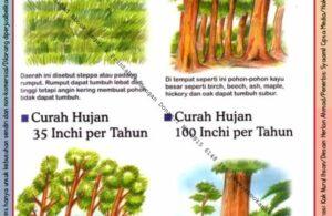 Ebook Legal dan Printable Aku Anak Cerdas Serangga dan Tumbuhan 2, Curah Hujan (23)