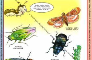Ebook Legal dan Printable Aku Anak Cerdas Serangga dan Tumbuhan 2, Hama Serangga (17)