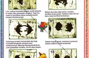 Ebook Legal dan Printable Aku Anak Cerdas Serangga dan Tumbuhan 2, Pembelahan Sel Menjadi Dua (25)