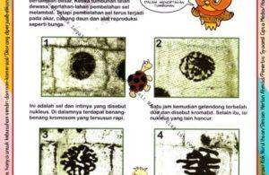 Ebook Legal dan Printable Aku Anak Cerdas Serangga dan Tumbuhan 2, Proses Pembelahan Sel (24)