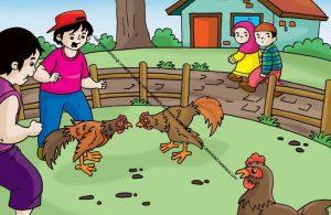Gambar (17) Anak-Anak Nakal sedang Asyik Mengadu Ayam