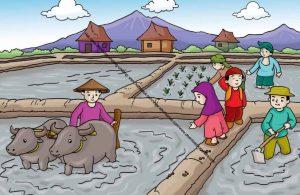 Gambar (6) Petani Sedang Bekerja Menanam Padi di Sawah