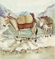 Keledai Menjadi Alat Angkut di Lereng Pegunungan yang Curam