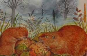 Makanan Berang-Berang dan Beaver Ternyata Berbeda